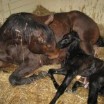 pretty lainedi naissance